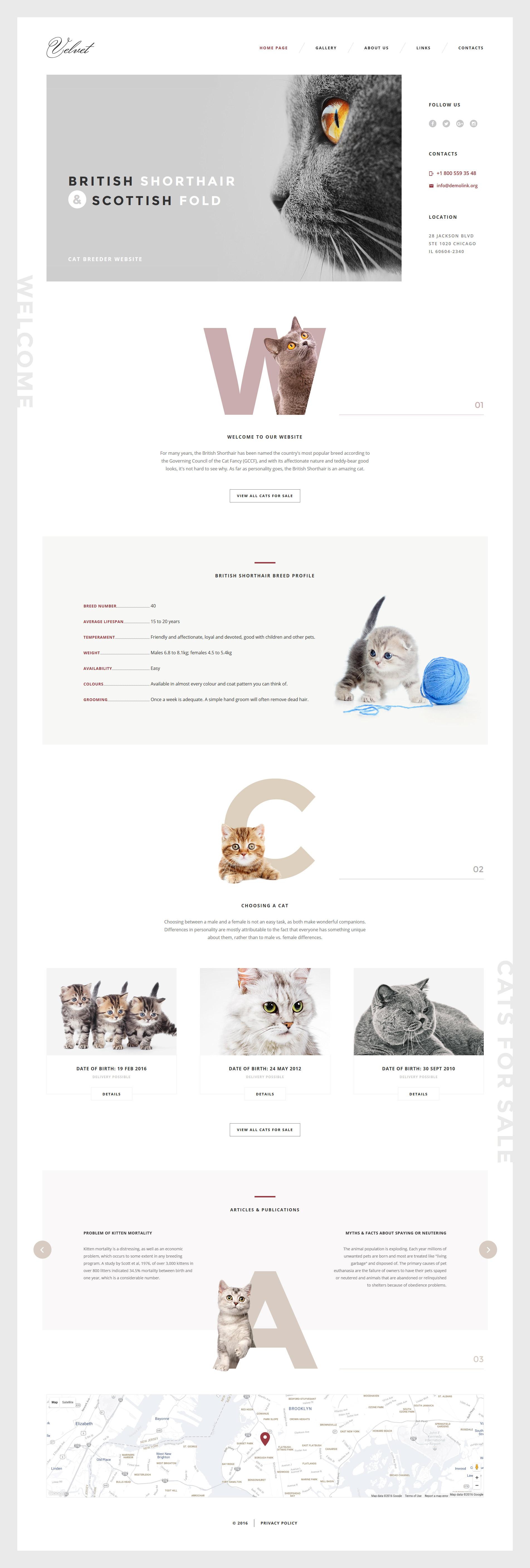 Адаптивний Шаблон сайту на тему коти №58574