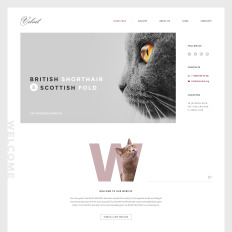 20+ Best Cat Website Templates