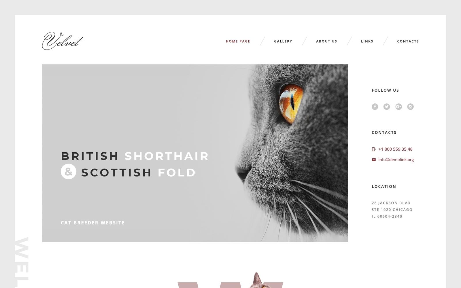 Responzivní Šablona webových stránek na téma Kočky #58574