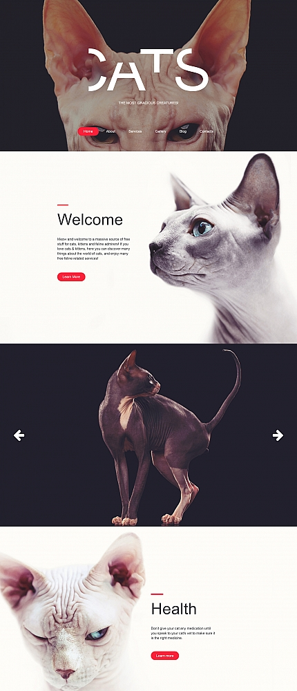 ADOBE Photoshop Template 59276 Home Page Screenshot