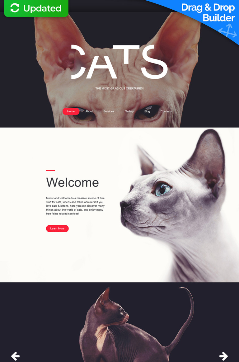 Cat Responsive Moto CMS 3 Template New Screenshots BIG