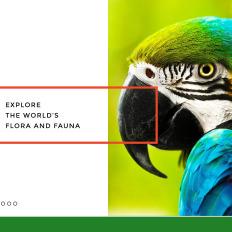 Zoo joomla template #38731.