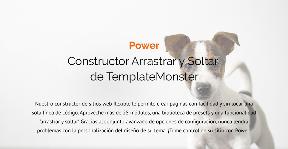 Website Design Template 62483 - kitten clinical veterinary tips feed medicine staff services breed age color accommodation adaptable apparel bed dishes bowl bone cleanup collar flea tick grooming supplies vitamins recommenda