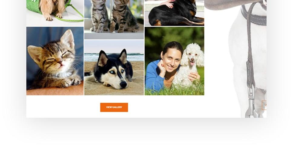Website Design Template 62483 - bowl bone cleanup collar flea tick grooming supplies vitamins recommenda