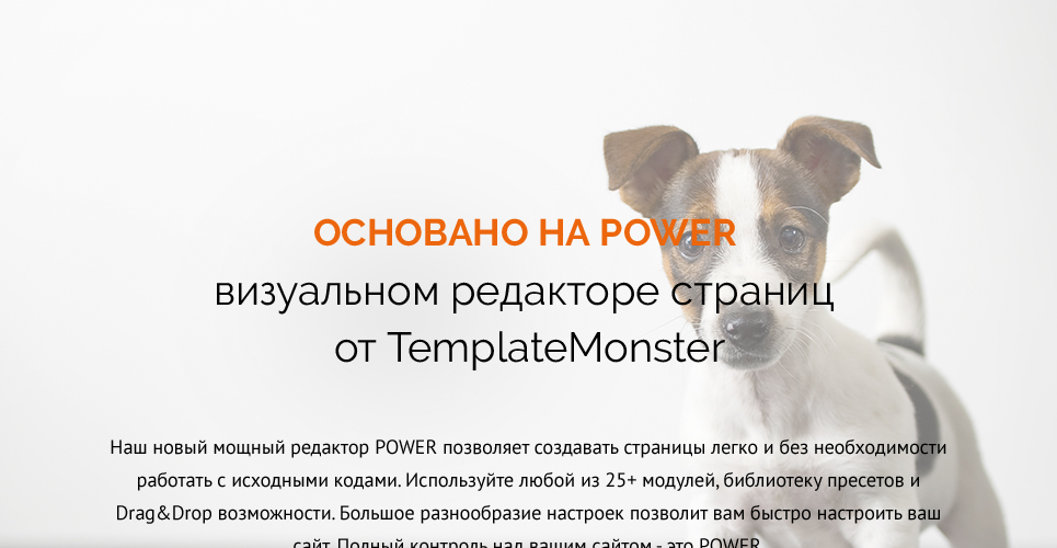 Website Design Template 62483 - tips feed medicine staff services breed age color accommodation adaptable apparel bed dishes bowl bone cleanup collar flea tick grooming supplies vitamins recommenda
