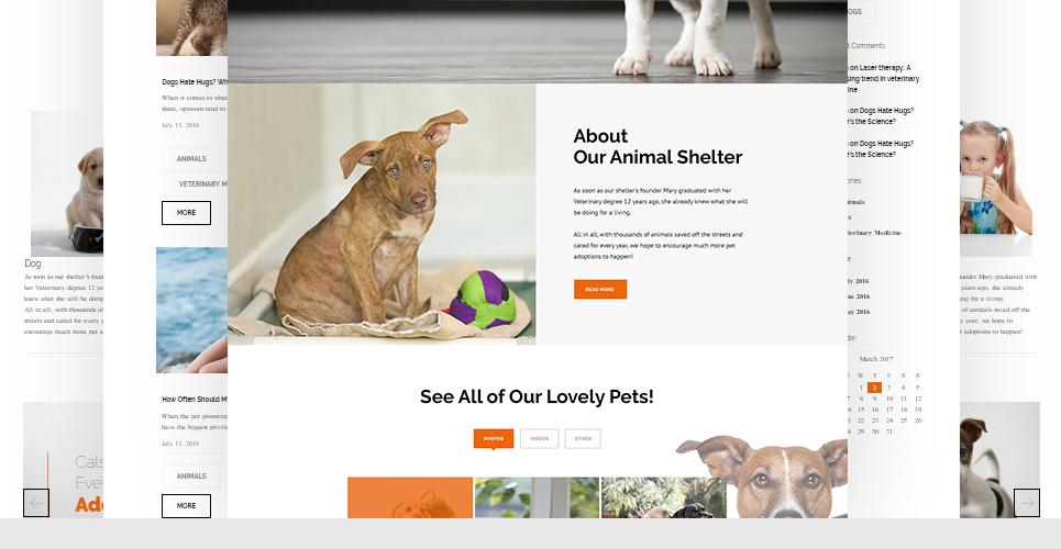 Website Design Template 62483 - supplies vitamins recommenda