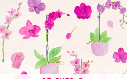 27 Lovely Orchid Flowers Illustration