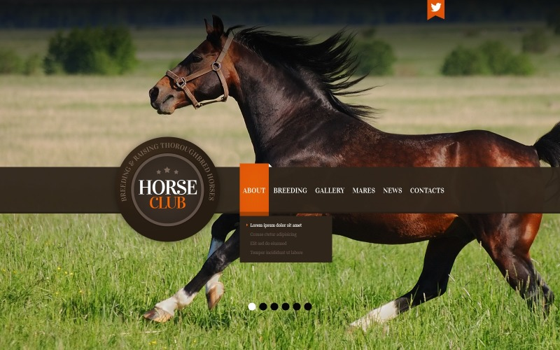 Horse Joomla Template