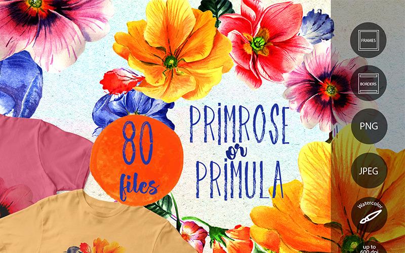 Примула или цветы примулы - PNG акварель - Иллюстрация