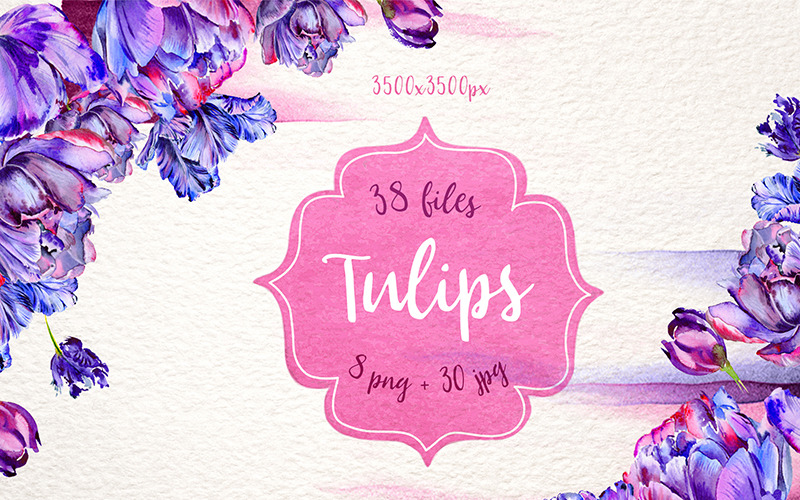 Lovely Purple Tulip PNG Watercolor Set - Illustration