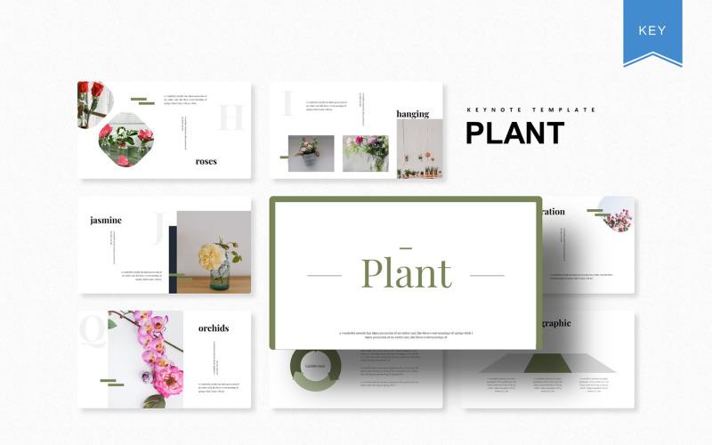 Planta - Plantilla de Keynote