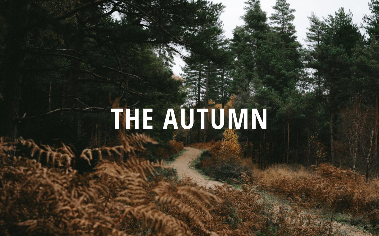 "Responzivní Drupal šablona ""The Autumn - Portfolio | Responsive"" #98473"